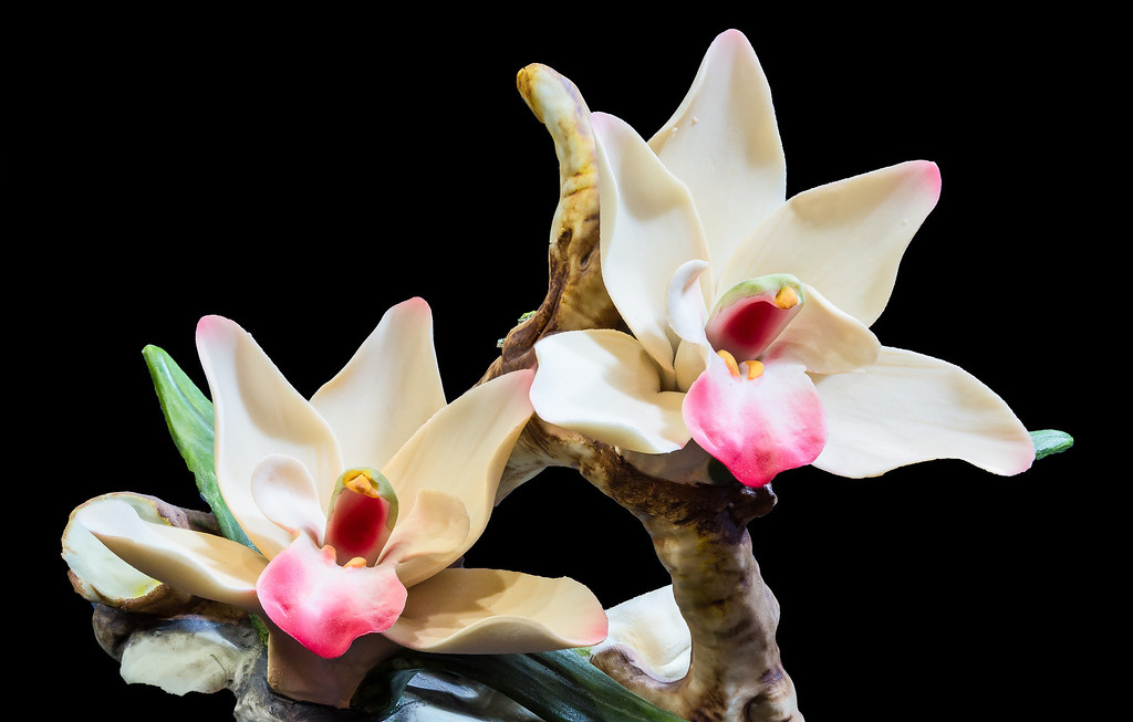 Porcelin Orchid